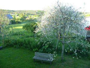 Garten mit Hegaublick